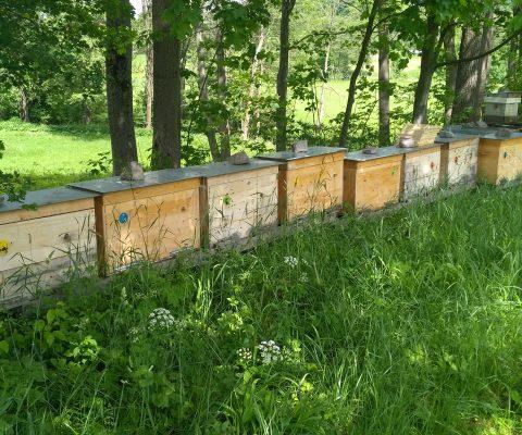 Včelaření v ležanech